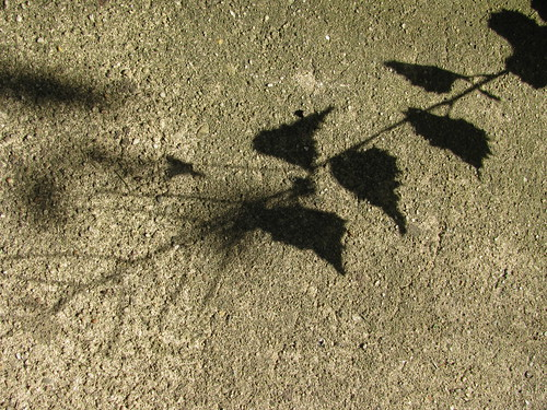 shadow on concrete