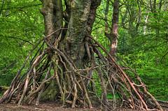 Ecclesall Woods_170510_0149