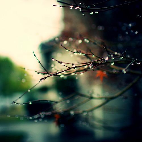 Fotografía de unas ramas de un árbol otoñal con gotas de agua de lluvia o rocío