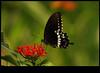 xDSC_2247 copy (sajeshjose) Tags: camp wildlife bangalore sash bannerghatta sajesh bennerghatta ireboot