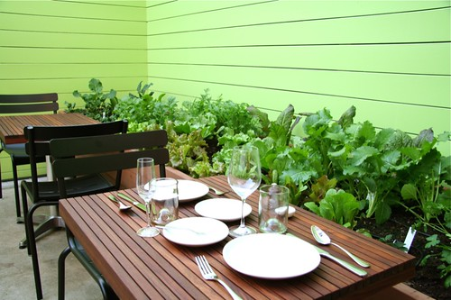 Outdoor Seating and Edible Garden