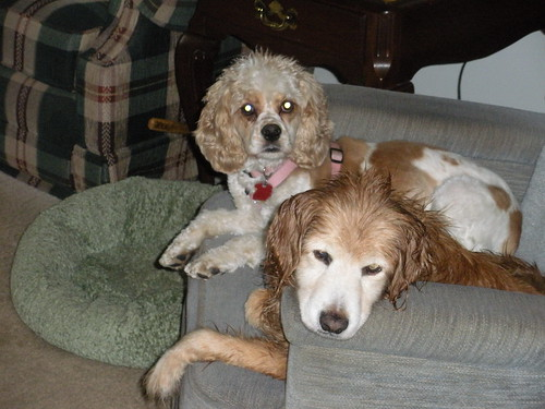 Buster and Dottie on the Blue Chair