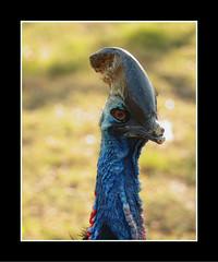 Ready for Carnival (Mimor) Tags: carnival copyright color bird canon photography mine danny dslr maximus dinesh kumar primeart sidnid anjaanasafar primefineart dannymaximus fotocrafter dmaximus anjaanarahi