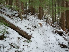 We hit snow at about 2800' as we enter the trees