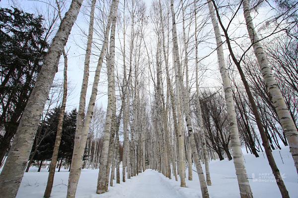 2009北海道-D5-5-美瑛拓真館_07.jpg