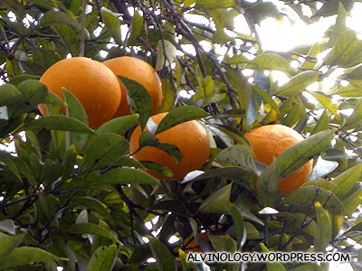 Oranges spotted in someones house