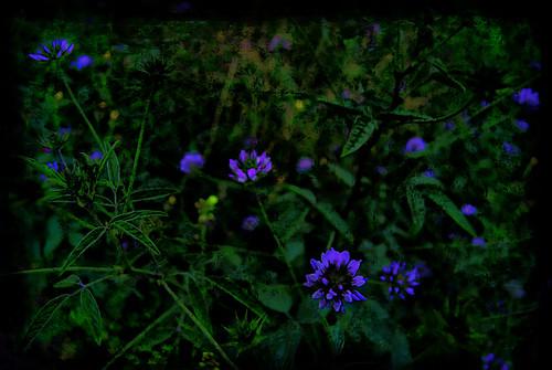 DSC_040_Botánico