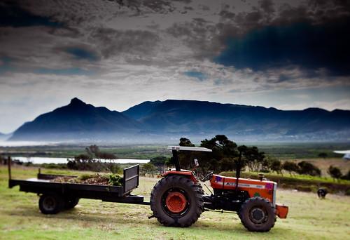 """""""Meisie"""" Ferguson tractor, Kommetjie"""