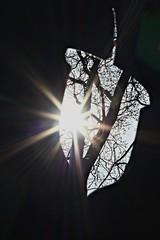 Inverted silhouette (mountaingoatee) Tags: abstract 50mm sunburst sihlouette flickrtoday lifethrualens selftaughtphotographers elitephotography bigroomcameraobscura canonxsi