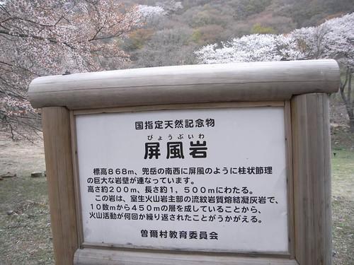 【桜】『屏風岩公苑』@曽爾村-01