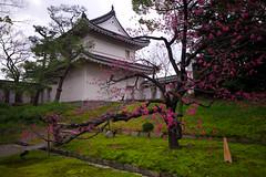 japan09_p1-054 (ar2r_weber) Tags: japan kyoto nijo