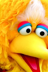 close up of big bird -- freaky