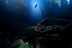 Sea Life (CarloAlessioCozzolino) Tags: fish water aquarium sealife acqua acquario pesce treasurechest castelnuovodelgarda theunforgettablepictures theperfectphotographer forziere paololivornosfriends gardalandsealifeaquarium
