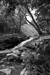 Brook and woodlands, black and white photograph (jackie weisberg) Tags: summer blackandwhite bw green nature water leaves rock vertical creek forest landscape waterfall leaf rocks branches parks treetrunk photograph american trunk summertime trunks picturesque idyllic creeks blackandwhitephotograph jackieweisberg brookandwoodlands