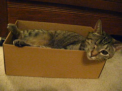 Maggie in the shoebox (2)