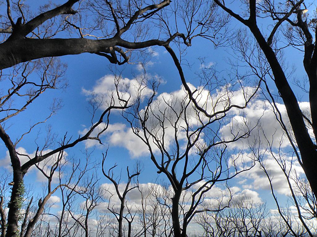 Canopy's Gone/Bushfire Scars