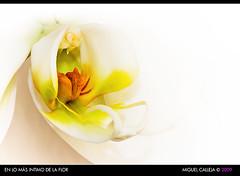 EN LO MAS NTIMO DE LA FLOR (MIGUEL_CD) Tags: white flower macro blanco flor colorphotoaward canon100mmf28efmacro phanaleopsis