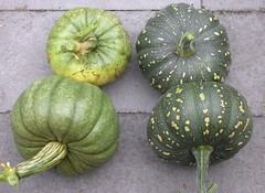 Pumpkin-SmallHarvest-8346
