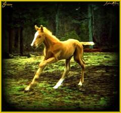 Giddeon at play (sylkky2) Tags: friends horses art photoshopped fabulous colt quarterhorse foal fineartphotos