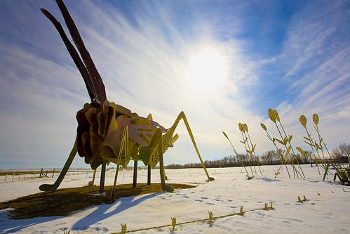 Grasshopper's Delight