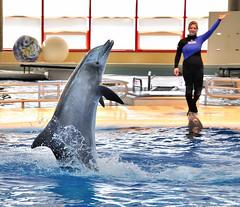 Walking on water, Baltimore, Maryland, National Aquarium, May 19 , 2009 (Ivan S. Abrams) Tags: fish aquarium nikon dolphin maryland baltimore dolphins whale whales dolphinarium delphinarium marinemammal wetsuit nationalaquarium wetsuits aquariums smörgåsbord marinemammals cetaceans cetacean d700 onlythebestare ivansabrams nikon24120mmf3556gvr nikkor24120mmf35mmf3556gvr abramsandmcdanielinternationallawandeconomicdiplomacy ivansabramsarizonaattorney ivansabramsbauniversityofpittsburghjduniversityofpittsburghllmuniversityofarizonainternationallawyer
