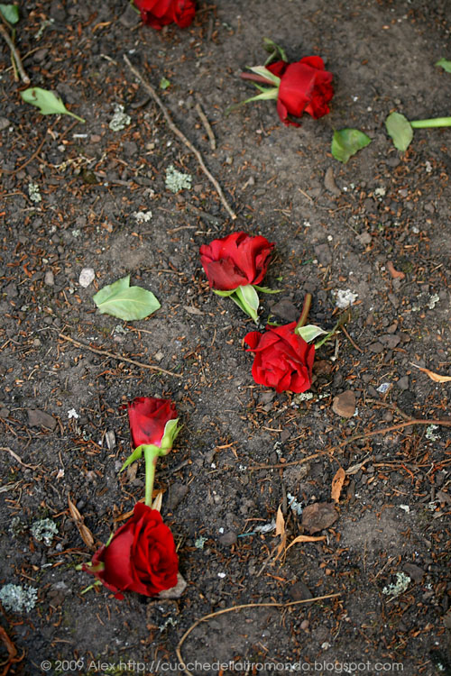 Rose per terra