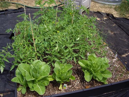 Garden Box #3 6/18/09