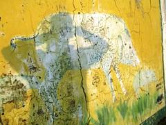 Chail, India (husar) Tags: shadow india mural schatten indien mauer wildschwein chail wildbore