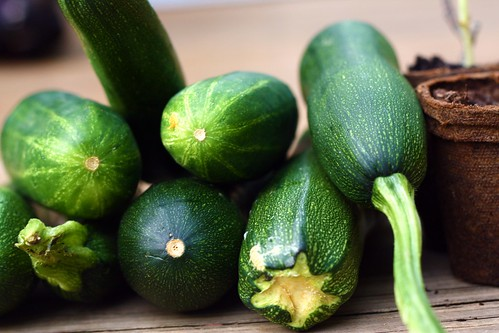 cucumbers and zucchini