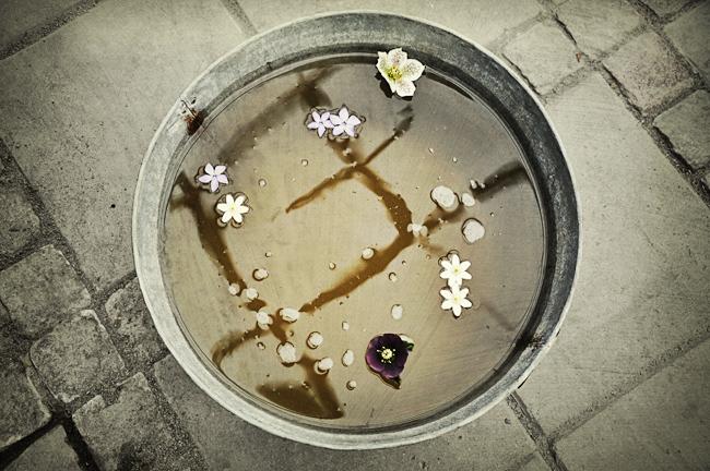 vattenbad i växthuset