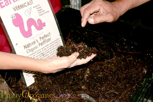 Earthworm Sanctuary-vermicast