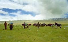 Lamma La 5120m (reurinkjan) Tags: 2002 yak nature nikon tibet everest dri tingri jomolangma tibetanlandscape lammala janreurink བོད། བོད་ལྗོངས།