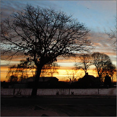 Morning Gold II (Luc B - PhLB) Tags: morning trees winter snow tree clouds sunrise square gold bomen silhouettes boom mywebsite setnieuw wintersquare settrees phlb youcanvisitmywebsiteathttpphlbpcdheldennl httpphlbpcdheldennl