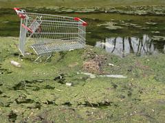 Trala Fiin Beag ~ Lesser Wild Trolley (caoin) Tags: water melbourne brunswick shoppingtrolley critters mooneepondscreek uisce ainmhithe tralasiopadireachta