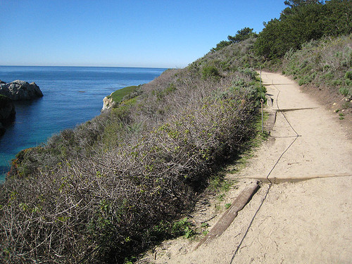 Pt Lobos - Bird Island Trail