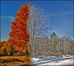 ~ FALLinter ~ (ViaMoi) Tags: autumn winter friends orange snow ontario canada cold color colour art nature digital photoshop canon photography photographer wildlife ottawa capital newmedia creative manipulation canadian adobe saturation 2008 2009 imagery naturalist cubism manipulate naturesfinest blueribbonwinner imagist supershot ottawacanada flickrsbest golddragon 40d mywinners abigfave innamoramento anawesomeshot colorphotoaward aplusphoto diamondclassphotographer flickrdiamond citrit theunforgettablepictures canon40d naturewatcher colourartaward betterthangood theperfectphotographer viamoi goldstaraward damniwishidtakenthat flickrlovers 100commentgroup