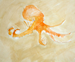 the wise (paper whistle) Tags: orange painting drawing octopus neutral seafloor brandistrickland paperwhistle