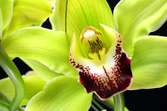 Orchid 211, Colorado (sethgoldstein72) Tags: naturaleza y fotografia greatphotographers dreamgarden bloomingflowers awesomeshots peaceaward agradephoto flickraward flickrbronzeaward idratherbeluckythangood empyreanflowers magicofaworldinmacro absolutelybeauty exemplaryshotsflickrsbest macromix concordians excapture flowerorfoliagedetail macroengeneral flickrsfantasticflowers floraandfaunaoftheworld macroelsalvador flickrroseawards top20greenish crazyaboutnature ddsnet qualitypixels defendersnaturemacro defendersnaturemacroandcloseupgroup flickrovertheshot awesomeblossoms bestflickrphotography doubledragonawards floresymasflores amazingdetails dragonflyawards superbestshotsonflickr whatistriveforinphotography arteoalgonuevo flickrsbestseriousphotographers elclickdenikon thedreamersgroup coloursofflowers todaysbest flowersmacrowaterdrops beautifulfloras flickrsgottalent composersbreath fotografiaynaturaleza beautifulseasons poppyawards naturesanctuary mycolorfulflowers goldstarawardlevel1 naturespotofgoldlevel1 ~~everythingflowers~~ worldcupofphotography ~~flowers~~ redgroupno1 greenstylin flickrstruereflection1 certifiedphotographerlevel1 topphotoexpertlevel2 flickrsfinestimages1 flickrsfinestimageslevel1