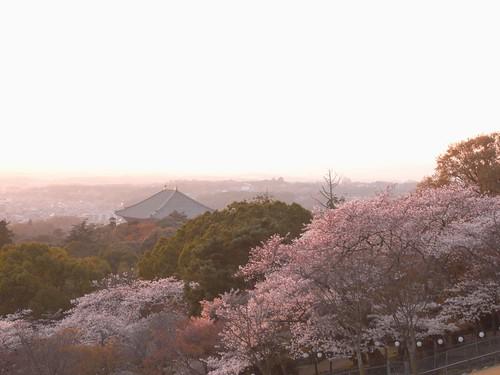 09-04-05【桜】@若草山-03