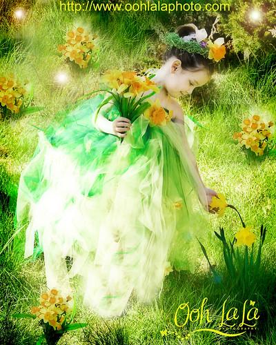 Miss Daffodil