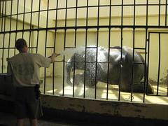 Elephant getting a bath