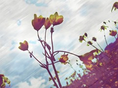 ('sema) Tags: flower texture love me by dream taken iek d texturebyme flickrlovers