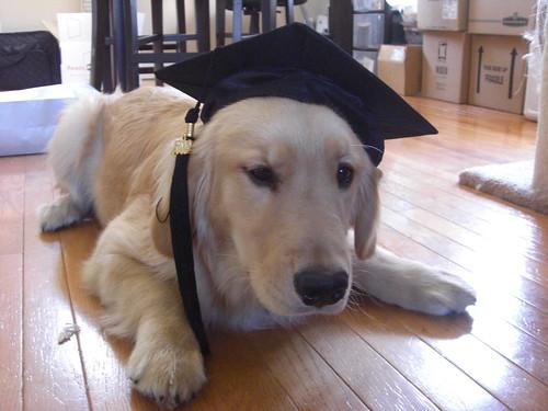 Substitute Graduate Photo 3