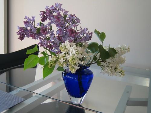 aunt's lilacs