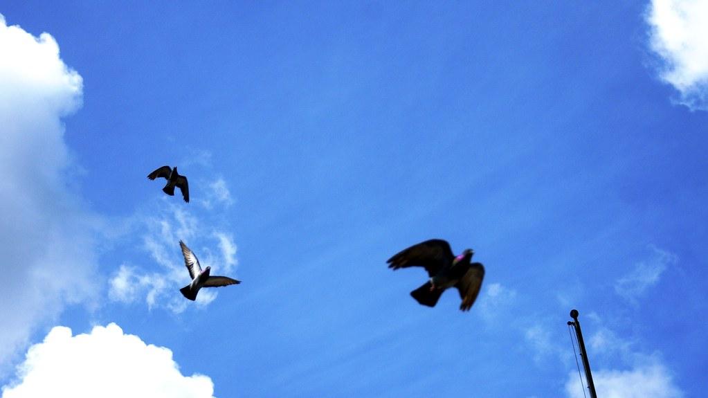 No dejemos de volar...
