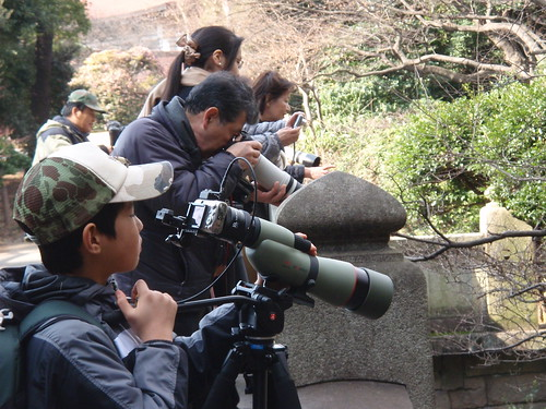 Fotografiando patos