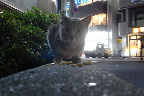 Today's Cat@20090625