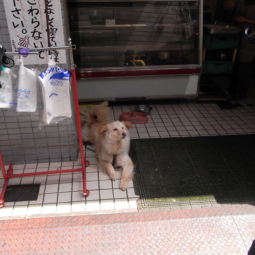 dog at store fronts