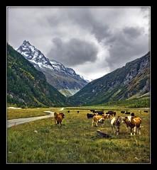 Switzerland. Zinal . September 15,2009. (4157) (Izakigur) Tags: mountains alps alpes landscape schweiz switzerland nikon europa europe flickr suisse suiza swiss feel 1755mmf28g d200 alpen helvetia nikkor svizzera wallis lepetitprince ch valais dieschweiz musictomyeyes  1755 zinal suizo romandie  myswitzerland lasuisse nikond200 nikkor1755f28 nikkor1755 valdanniviers  nikon1755f28g superaplus aplusphoto   izakigur vanagram cantonduvalais suisia imagesforthelittleprince laventuresuisse izakigur2009 mygearandmepremium izakiguralps  izakigurzinal missuterriblemuchhappynewyearmydeardearfriend willykaufman