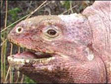 La rosada sonriendo para la cámara
